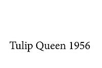 Tulip Queen - 1956