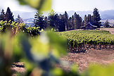USA, Oregon, Willamette Valley, horizontal landscape of the vines and tasting room at Sotor Vineyards, Carlton