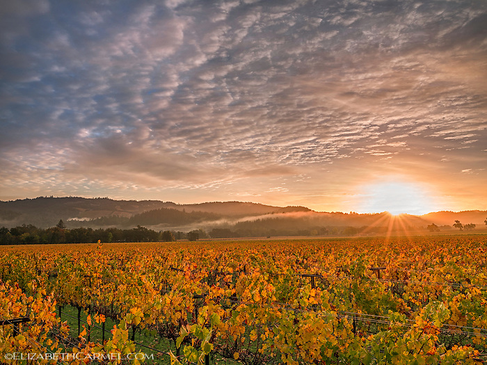 Autumn Sunrise, Napa Valley