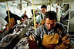 une fois le poisson dans les cales, tout l'équipage se met à trier, éviscérer, laver et mettre en glace la cargaison. L'opération peut prendre jusqu'à trois heures.