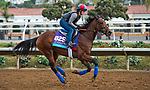 DEL MAR, CA - OCTOBER 02: Untamed Domain, owned by West Point Thoroughbreds, Inc. and trained by H. Graham Motion, exercises in preparation for Breeders' Cup Juvenile Turf at Del Mar Thoroughbred Club on November 2, 2017 in Del Mar, California. (Photo by Anna Purdy/Eclipse Sportswire/Breeders Cup)