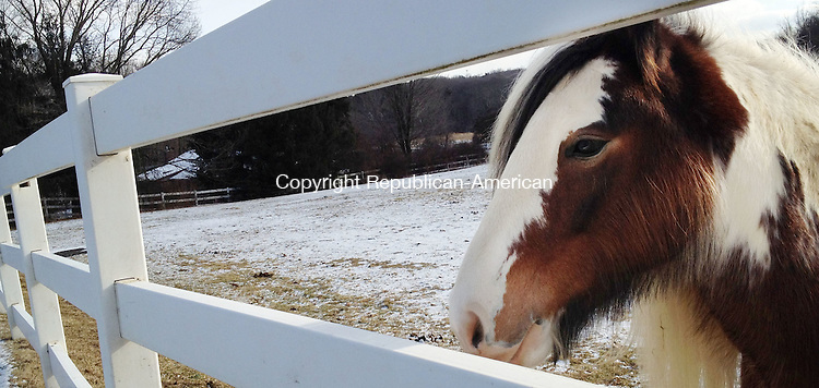 Countrylife Banner.SOUTHBURY, CT. 22 January 2013-012213SV06-A horse enjoys a snowy field at Mountain Valley Equestrian Center in Southbury Tuesday..Steven Valenti Republican-American
