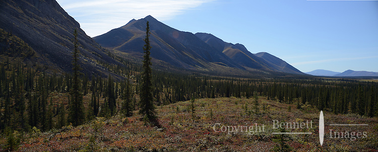A hillside overlooking the Sheenjek River valley, in Alaska's Arctic National Wildlife Refuge treats visitors to beautiful fall colors in late August. STITCHED PANORAMA