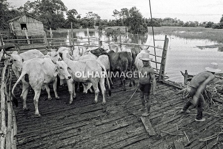 Curral com animais. Marombas de gado. Obidos. Para. 1999. Foto de Sergio Amaral.