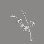 Beautiful simple Japanese Zen ink painting artwork design of bamboo stalk with young leaves illustration on light gray background
