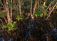 Triboa Mangrove Park, Pampanga, Subic Bay, Philippines