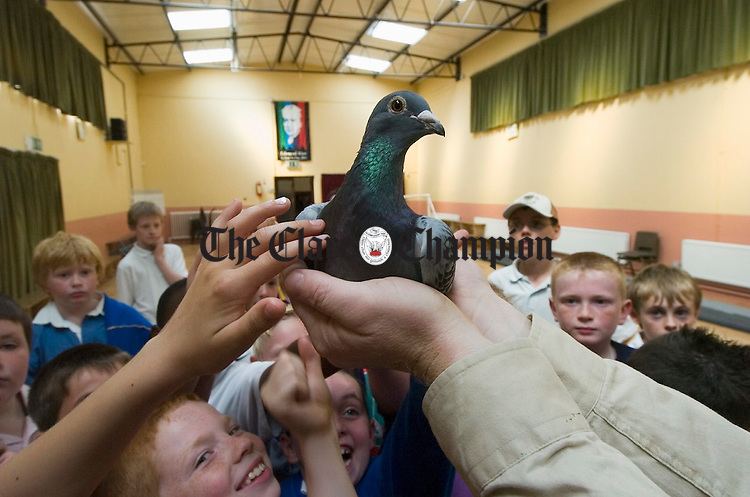 All hands want to feel the feathers during the visit of Banner Racing Pidgeon Club to the Ennis CBS. Photograph by John Kelly.