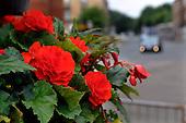 Glasgow smells - suburban flowers - 18.7.12 - 07702 319 738 - clanmacleod@btinternet.com - www.donald-macleod.com