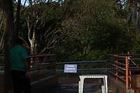 BELO HORIZONTE, MG, 04.07.2019 - CIDADE-MG - Filhote de gorila no Jardim Zoológico de Belo Horizonte, na região da Pampulha, em cidade de Belo Horizonte, nesta quinta-feira, 04. (Foto: Doug Patricio/Brazil Photo Press)