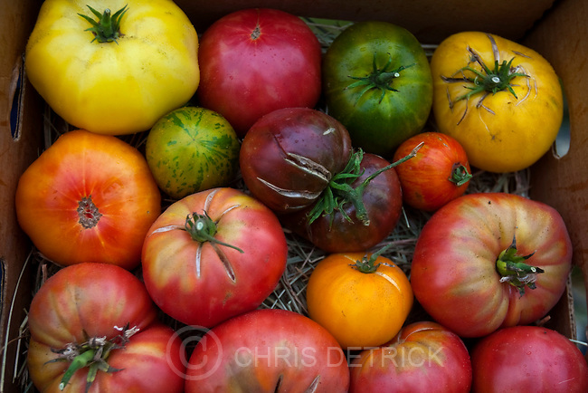 Chris Detrick  |  The Salt Lake Tribune .Some of Dale Allred's organic tomatoes photographed at the Jacobs Cove Heritage Farm in Midway Thursday October 7, 2010.  Allred is an organic farmer who is going to develop geothermal heated hothouses in Midway to provide fresh, locally grown, chemical free produce year-round.