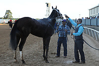 HOT SPRINGS, AR - APRIL 15: Classic Empire getting sprayed off with water after winning the Arkansas Derby at Oaklawn Park on April 15, 2017 in Hot Springs, Arkansas. (Photo by Justin Manning/Eclipse Sportswire/Getty Images)