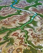 Mangrove sur la côte Ouest