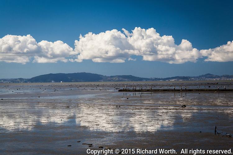 Elegant but impotent 'fluff-balls' float over San Francisco Bay at low tide.