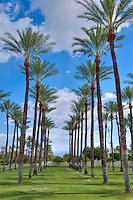 Rows of Palm Trees, Cloudy, Blue, Sky, Palm Desert, California, United States, Coachella Valley, east of Palm Springs,