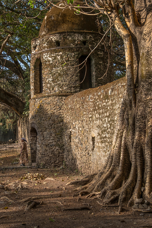 Two kilometers out of Gondar's town centre,  Emperor Fasilidas's Pool is surrounded by a tall stone walls with six turrets.  In this scene, a Banyon tree has securely anchored the wall in place.