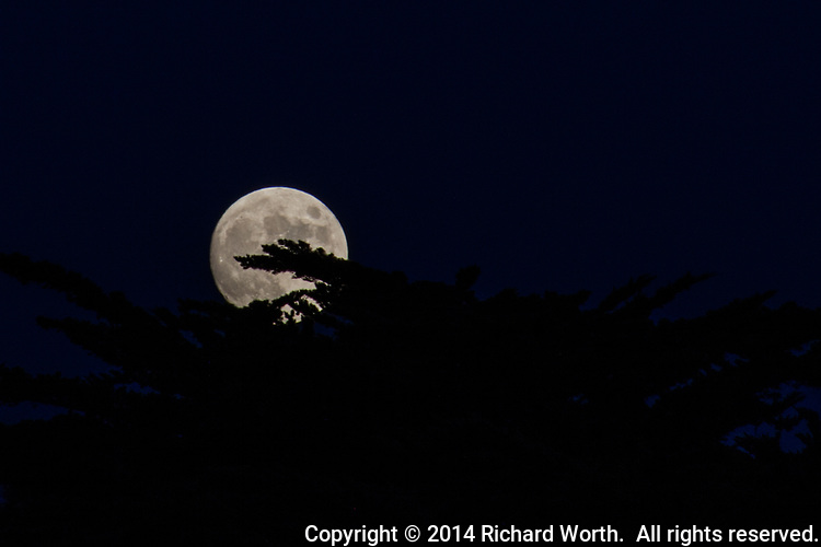 The moon photographed the day before the November full moon, known as the Beaver Moon or First Frost Moon,  as it rose over trees at the San Leandro Marina Park along San Francisco Bay.