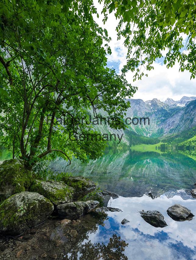 Deutschland, Bayern, Oberbayern, Berchtesgadener Land, am Obersee im Nationalpark Berchtesgaden, am Ende des Sees liegt die Fischunkelalm | Germany, Upper Bavaria, Berchtesgadener Land, at Upper Lake in Berchtesgaden National Park