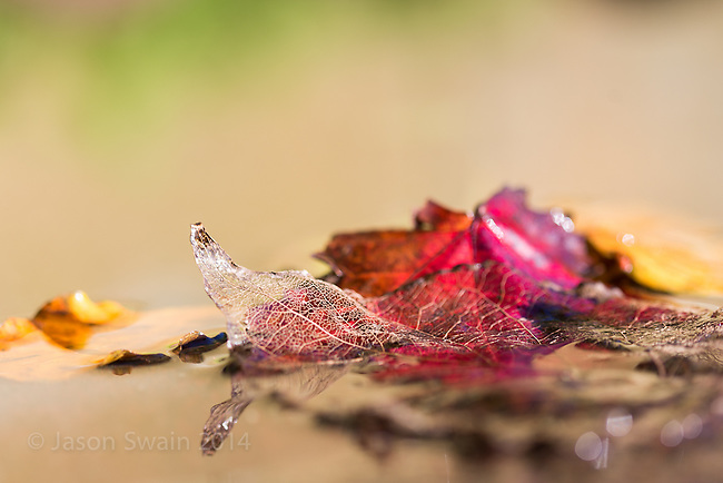 macro studies of beautiful autumn leaves