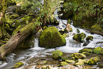 Merriman Creek, Quinault Rain Forest, Washington; Merriman Creek Falls