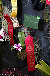 Deep Cut Orchid Society Show