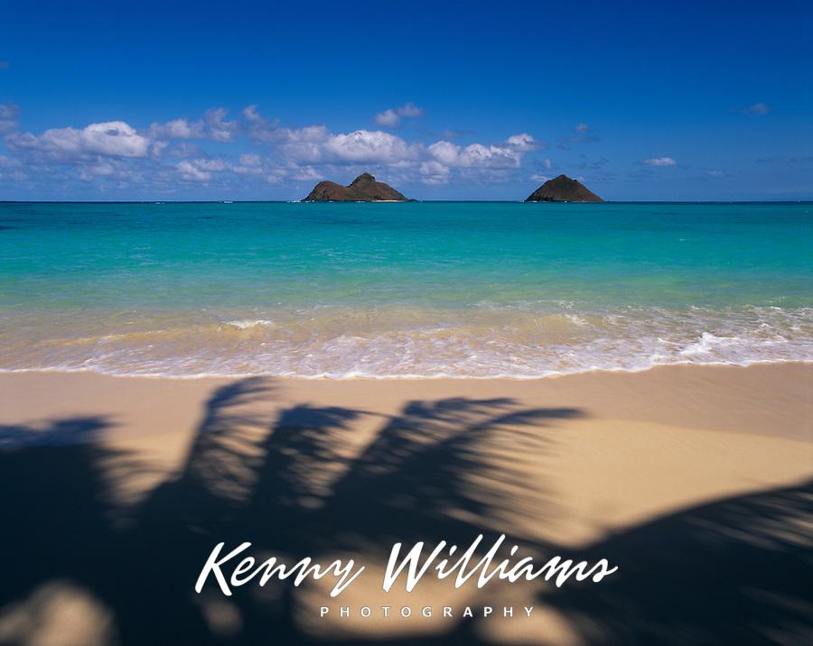 Palm Shadows & Mokulua Islands, Lanikai Beach, Kailua, Oahu, Hawaii, USA.