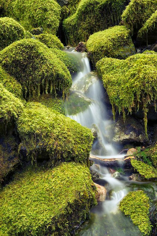 Moss covered rocks and stream. Opal Creek Wilderness, Oregon