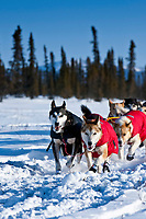 Ray Redington Jr. on the trail just before the halfway Cripple checkpoint during the 2010 Iditarod, Interior Alaska