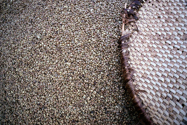 coffee, beans, industry, coffea, process, drying, mill, texture