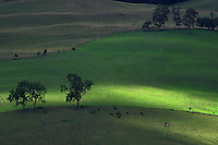 Light across a farm pasture.