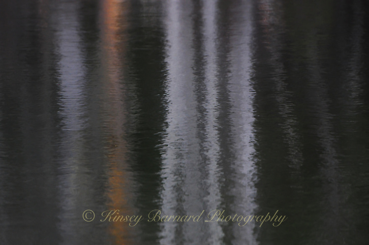 """""""BROODING REFLECTIONS"""""""