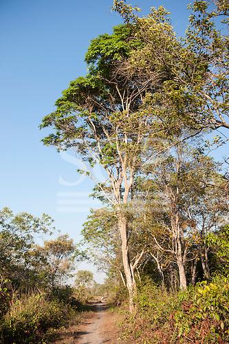 Xingu Indigenous Park, Mato Grosso, Brazil. Aldeia Matipu; on the way to the port on the Kuluene River.