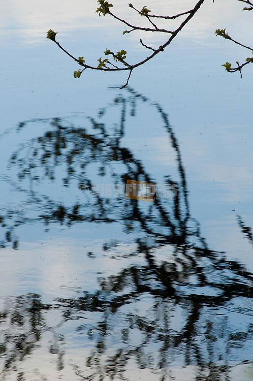 Tree Branch Reflecting in Water