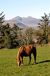 A horse grazes in a field in Aghadoe, Killarney.<br /> Photo Don MacMonagle<br /> e: info@macmonagle.com