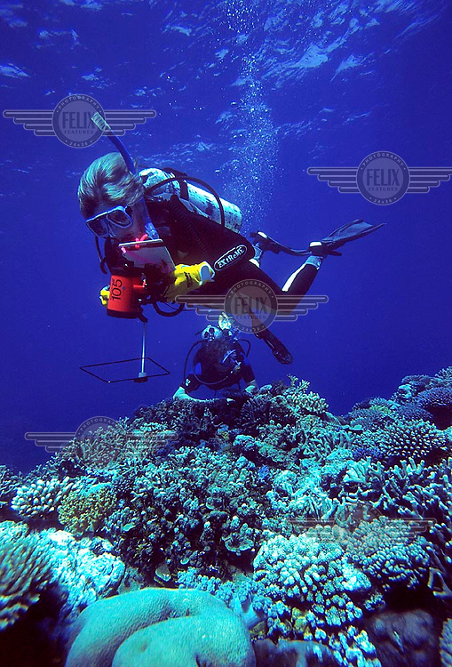 Marine biologist swim over a coral reef. Corals on a remote part of Great Barrier Reef. Scuba diving.