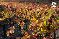 Colorful vineyard field at fall, Provence, France (Licence this image exclusively with Getty: http://www.gettyimages.com/detail/82406747 )