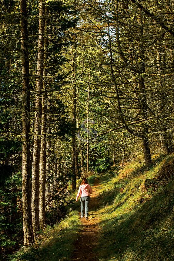 Woodland Track, Flowerdale, Gairloch, Ross & Cromarty, Northwest Highlands