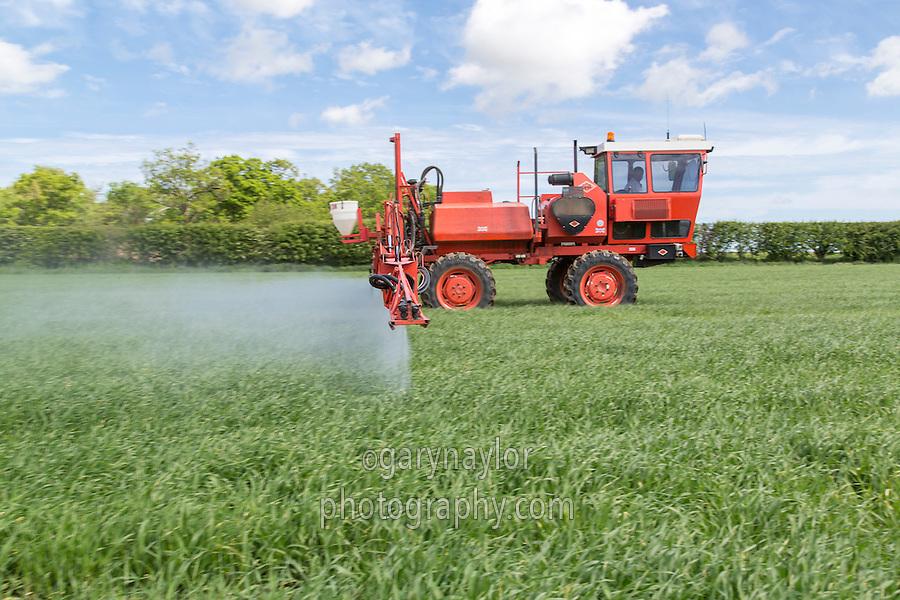 Spraying fungicide onto spring barley - Norfolk, May