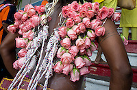 man in trance  carrying pink roses fixed by hooks in  the skin of his back, ascends stairways to sanctuary  of Batu Caves, Thaipusam ceremonies,  Kuala Lumpur, Malaysia, 2012. Thaipusam ceremonies, celebrated by tamile Hindu community in Malaysia, take place  in Sanctuary of Batu Caves at the border of Kuala Lumpur, each year around end of January or beginning of February, according to Hindu moon calendar. The event is paying hommage to Lord Murugan, a spirit or god created by Shiva to lead the army of gods against the army of evil demons, finally defeating the evil spirits. There are many ways to present offerings or sacrifices for this major religious event. Devotees mortify their bodies by carrying heavy kavaris with spears fixed in their skin or fruits, flowers and little post with holy milk fixed with hooks in their skin, ascending the stairways to the sanctuary in trance, `followed by assistant  taking care and musicians playing loud and fast rhythmic trance music.  Many families shave their head in a ritual before ascending the stairways, as part of rituals to obtain salvation for their ancestors.