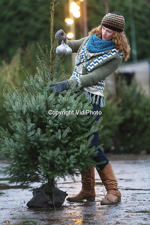 Foto: VidiPoto<br /> <br /> RHENEN &ndash; Je kunt kerstballen bij je gekochte kerstboom zoeken, maar ook een passende boom bij je ballen. En dat is nu precies wat Lianne van den Boogert uit Rhenen maandag doet. Wat is de mooiste spar bij haar zilveren kerstballen? Bij een kerstboomkweker tussen Rhenen en Veenendaal is er keuze genoeg, hoewel de tijd dringt. Vroeger dan andere jaren is er nu een enorme run op kerstbomen. Kwekers en verkopers zijn verbaasd over de enorme belangstelling. Kerstbomen zijn populairder dan ooit te voren. Een aanwijsbare reden is er niet echt. Voor Lianne van den Boogert is het de eerste keer dat ze een kerstboom in huis haalt. Sinds kort heeft ze een huisgenoot en een kerstboom brengt extra gezelligheid en sfeer in huis, vindt ze.