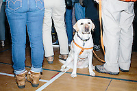 A dog stands in the audience as Vermont senator and Democratic presidential candidate Bernie Sanders speaks to senior citizens at the Peterborough Community Center gymnasium in Peterborough, New Hampshire.