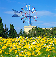 Spain, Balearic Islands, Mallorca: windmill with Spring Flowers | Spanien, Balearen, Mallorca: Windmuehle und Blumenwiese