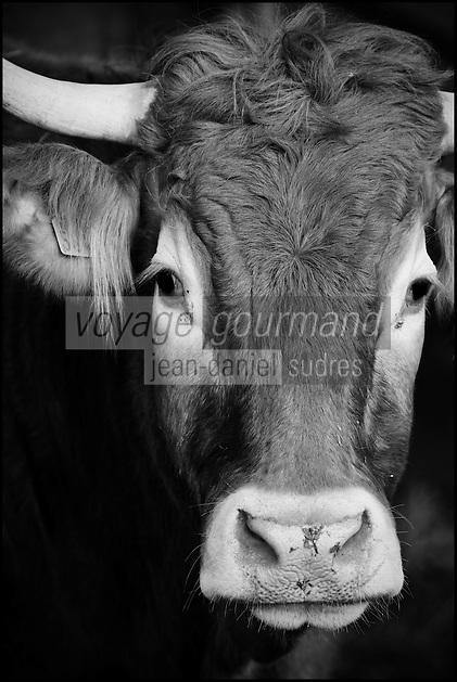 Europe/France/Aquitaine/40/Landes/Env de Dax/Tercis:  chez  Guy Pedelucq, éleveur de Boeuf gras de Chalosse //  France, Landes Tercis, at Guy Pedelucq breeder, fatty beef Chalosse
