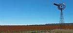 Sorghum fields in New England, NSW, Australia