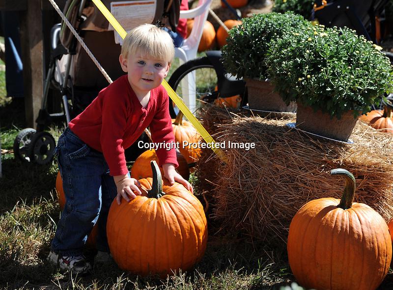 A Young Boy Exploring a Pumpkin at the Orchard, New Hampshire USA