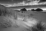 European beach grass lines the sandy shore at Pistol River State Park, Oregon, USA