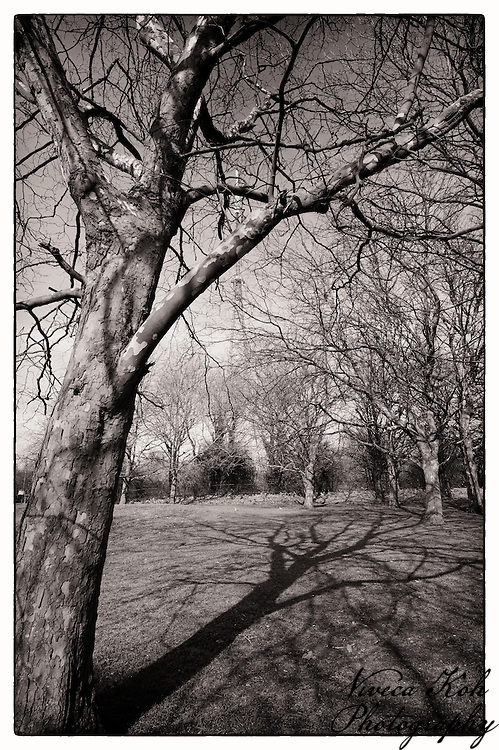 Trees and shadows in Crystal Palace Park, South London