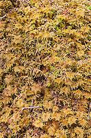 Moss detail, Alaska, USA