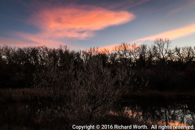 Sunset orange clouds float in a blue sky over a leafless treeline along a wetland adjacent to the Arkansas River.  In the foreground is a tree still filled with dead, dangling leaves reflecting the evening's light..