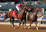 """October 07, 2018 : #1 War of Will and Drayden Van Dyke before running in the 28th running of The Dixiana Bourbon (Grade 3) $250,000 """"Win and You're In Breeders' Cup Juvenile Turf Division"""" at Keeneland Race Course on October 07, 2018 in Lexington, KY.  Candice Chavez/ESW/CSM"""