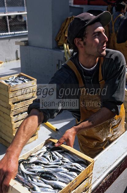 Europe/France/Languedoc-Roussillon/66/Pyrénées-Orientales/Port-Vendres: retour de pêche, déchargement des sardines [Non destiné à un usage publicitaire - Not intended for an advertising use]